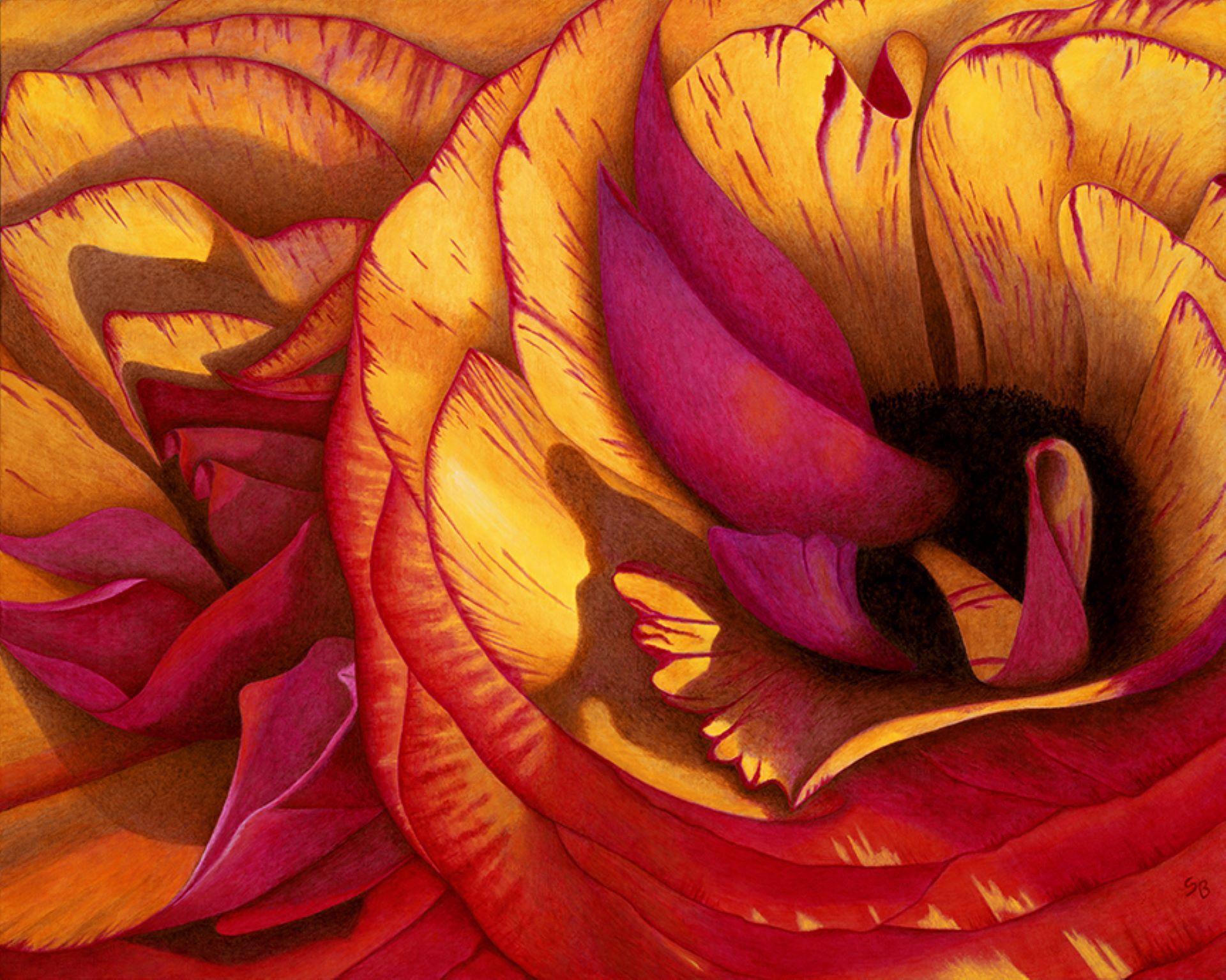 Ranunculus by Suzanne Beckstrom