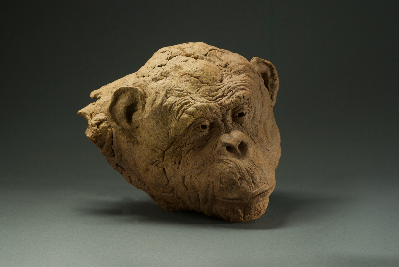 Ape Head, 2011